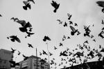 fugler over Vaterland